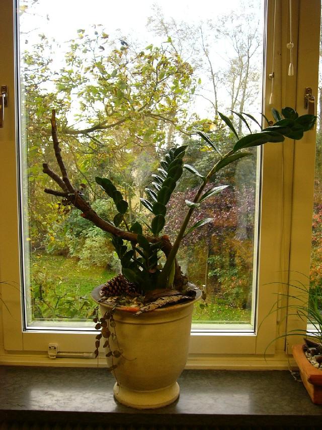 Tåliga krukväxter