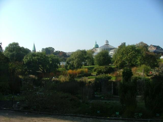 Sevärt på Botaniska trädgården i Köpenhamn