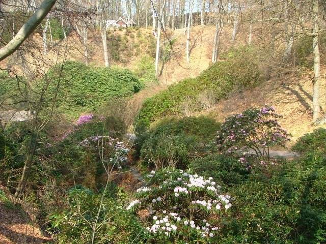 Rhododendrondalen