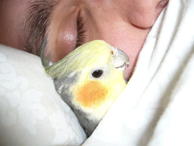 Pelle ligger i sängen