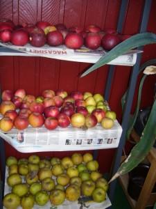 Äpplen på lagring