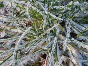 10° kallt och Frost i trädgården :)