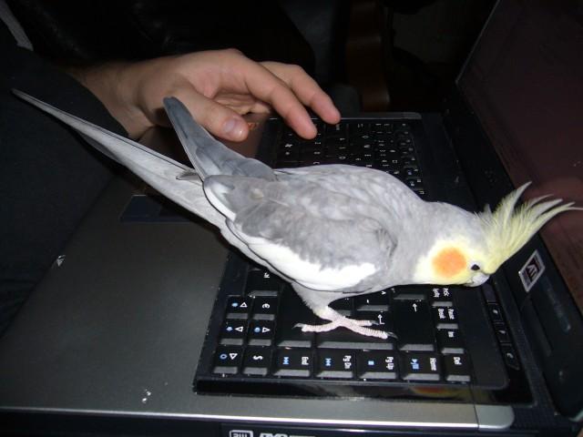 Pelle och datorn