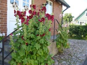 Torekov, Båstad, fina växter!