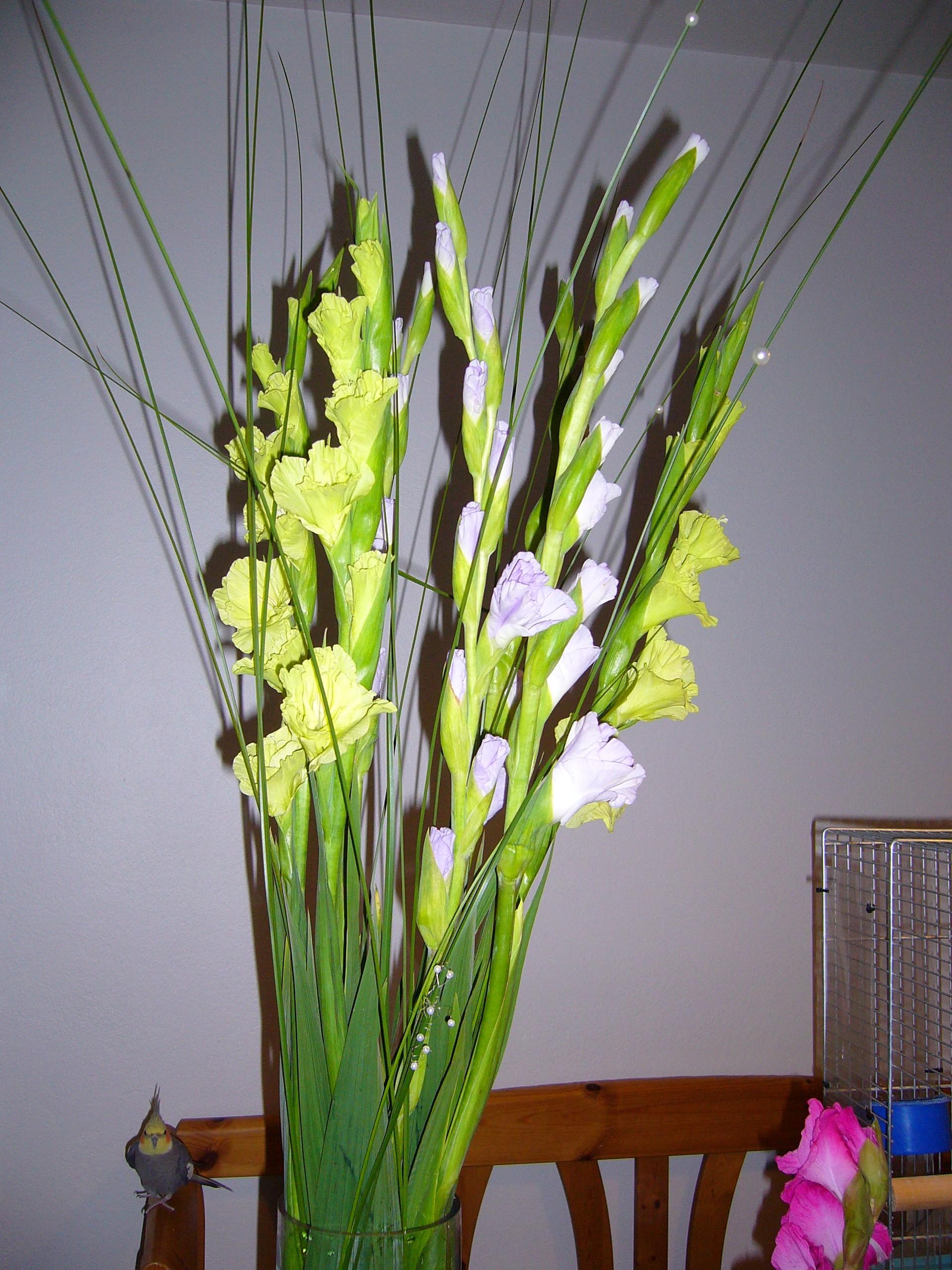 Gladiolus!