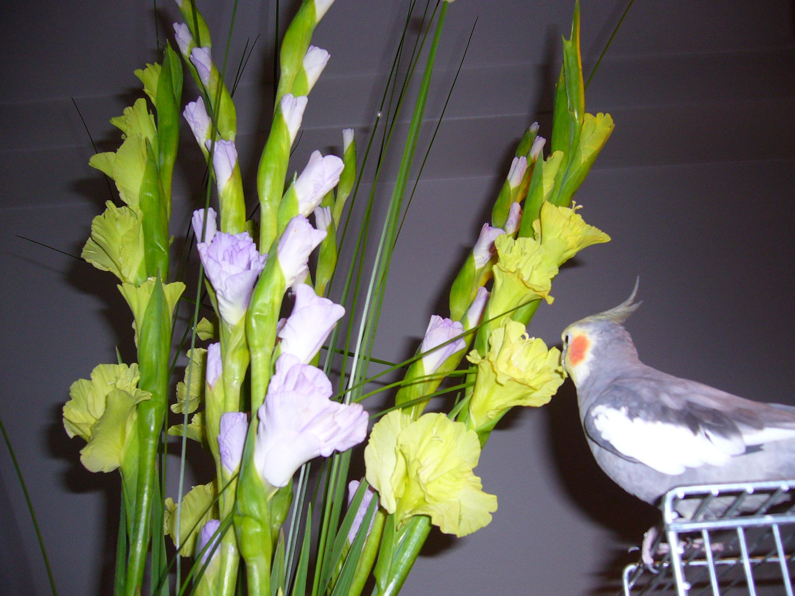 Mums med gladiolus!