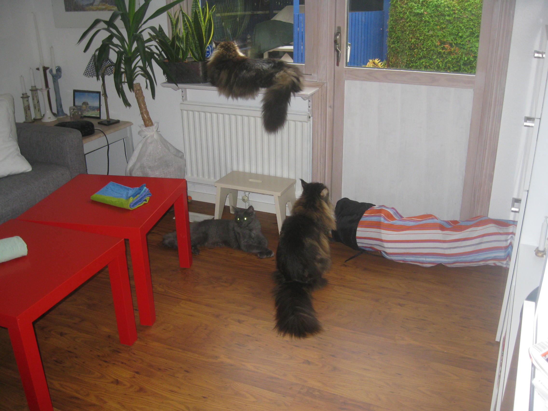 Vi vill gå ut! Nu!!