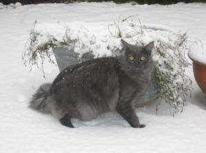 Wolfen i snön