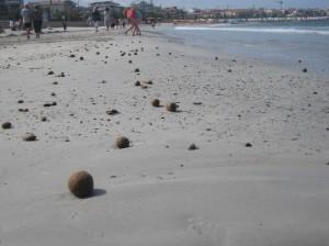 Sardinien 20100609-16 019