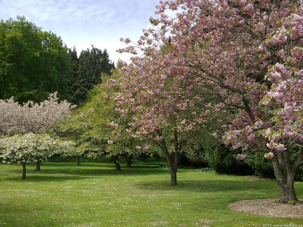 Träden i full blom!