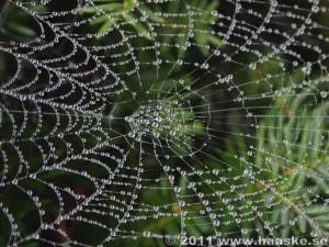 Pärlor för spindel